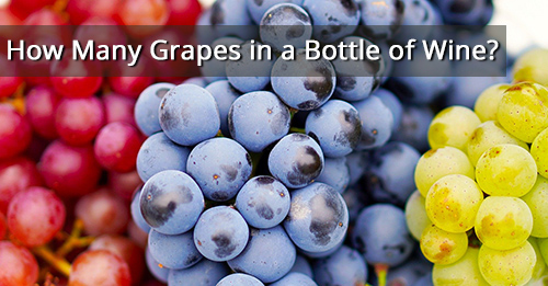 How Many Grapes in a Bottle of Wine?